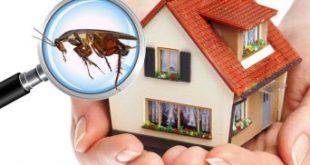 شركة مكافحة حشرات في أم القيوين