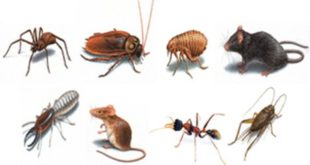 شركة مكافحة حشرات في رأس الخيمة